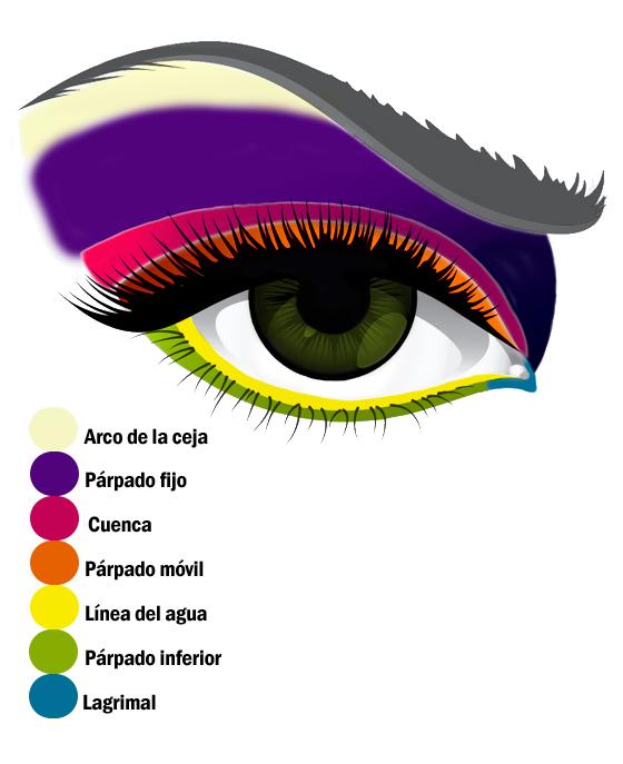 Dibujo con los nombres de las partes del ojo para maquillar