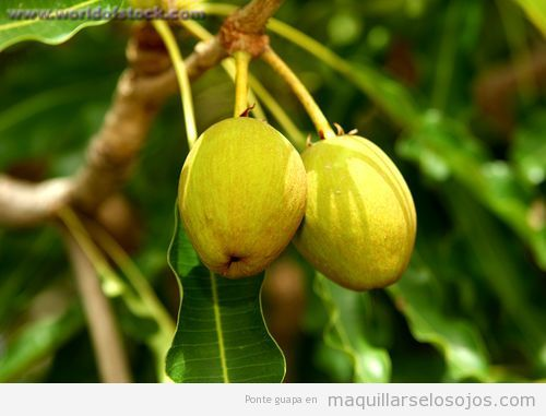 Fruto de árbol de Karité